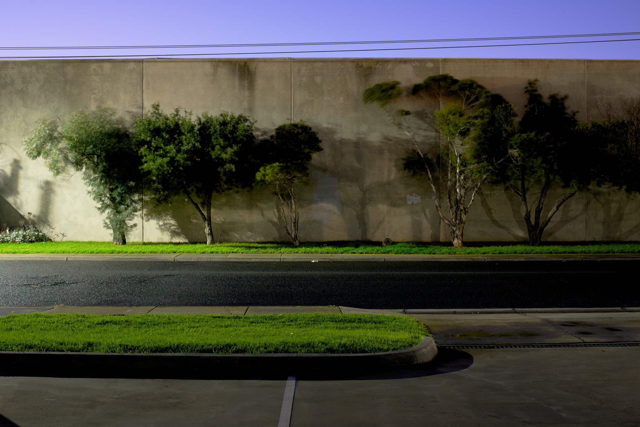 Wall with Bushes